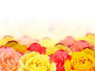 Hintergrundbild Rosen