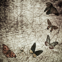 Fotorollo Schmetterlinge im Grunge butterfly wood grunge background