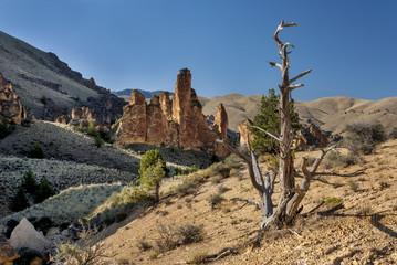 Fototapete - Dead tree in a desert canyon