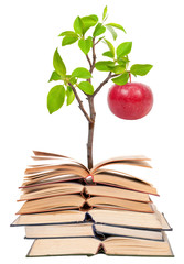 Books and apple tree