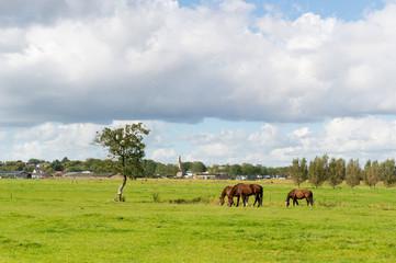 Dutch landscape with horses