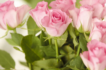 Closeup of pink roses.