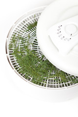 Dried dill on the Food Dehydrator rack