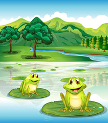 Two frogs above the waterlilies