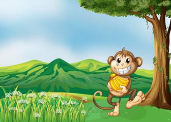 A monkey holding a banana