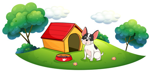 A dog outside its dog house