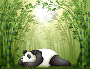 Wall Murals Bears A panda sleeping between the bamboo trees