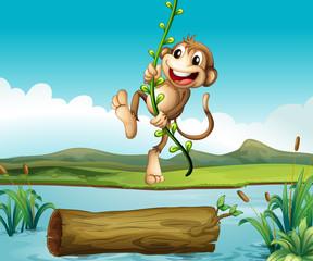 A monkey swinging