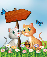 In de dag Katten Two cats in front of an empty wooden arrow board