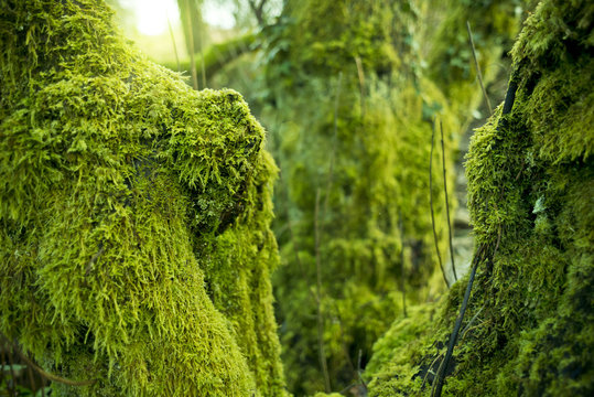 Trees Covered In Green Moss
