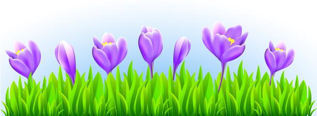 Fresh spring flower border