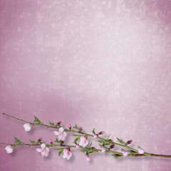 Beautiful abstract background with branch of Sakura