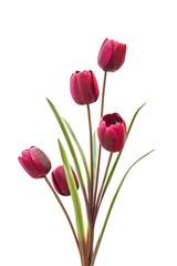 faked tulip