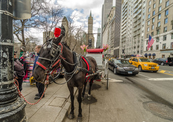 NEW YORK - MAR 4: Horse and carriage at Central Park, March 4, 2