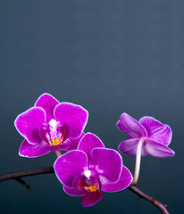 Orchideenkarte