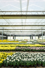 Flower planting in glass house