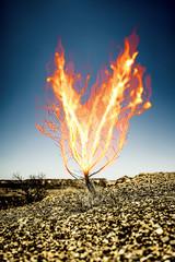 the burning thorn bush