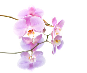 orchid with reflection on white background close-up