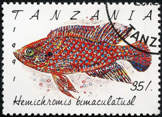 stamp printed in Tanzania shows Hemichromis bimaculatusl