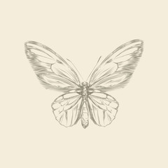 Vintage hand drawing butterfly vector eps 8