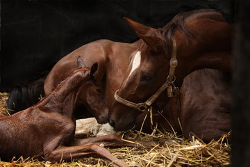 Foto auf Gartenposter Pferde Begrüßung Stute und Fohlen
