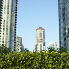 Green bush and city view