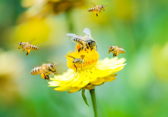 Photo sur Aluminium Bee Group of bees on a flower