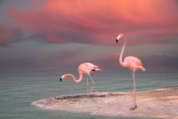 Aluminium Prints Flamingo Pink flamingo