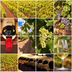 Collage vigne et vins