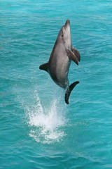 Tuinposter Dolfijnen Dolphin Jump