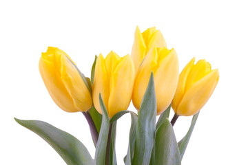 yellow, fresh tulips