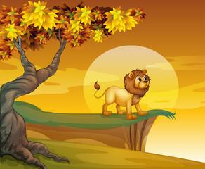A lion near the mountain cliff