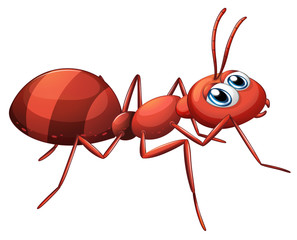 A stripe ant
