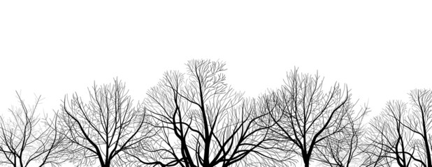 bare trees branches isolated on white