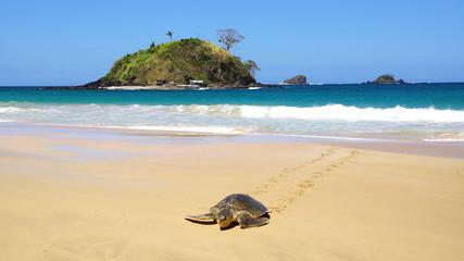 Sea turtle on beach. El Nido, Philippines