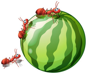 A watermelon with three ants