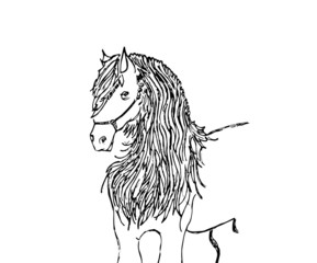 equino arabo