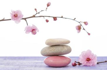 galets zen et branche en fleur Fototapete