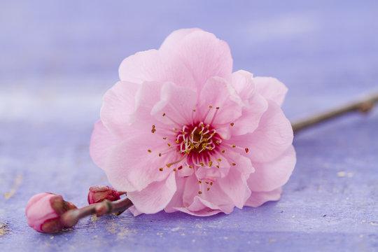 galets zen et branche en fleur