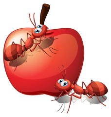The two ants and the red apple