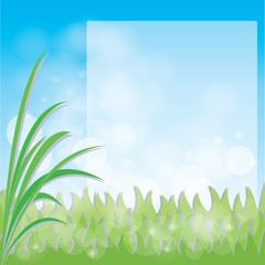 vector green grass with space for your text