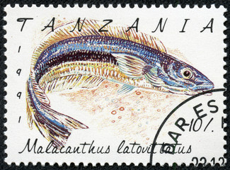 stamp printed in Tanzania shows Malacanthus latovittatus