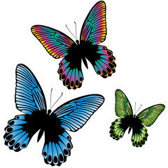 Set of a three colorful tropical butterfly isolated on a white