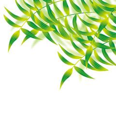 bamboo__big