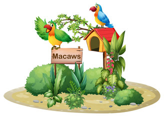 Two colorful parrots above a signboard and a birdhouse