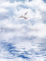 Dove of the water