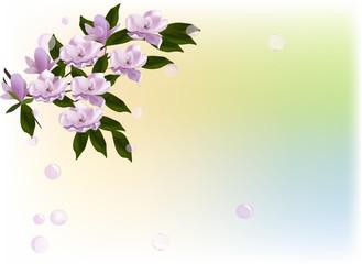 magnolia blossom branch on light background