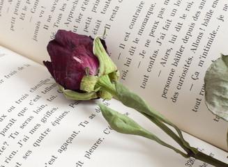 rose sur un livre roman