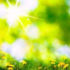 Fototapete - spring background
