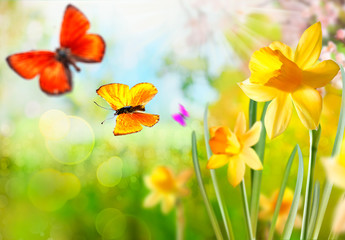 Spring daffodils and butterflies